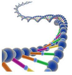 Nucleotidos2