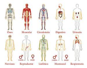 Sistemas del organismo