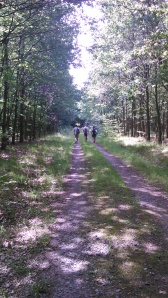El bosque maldito ok
